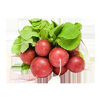 radis-frais