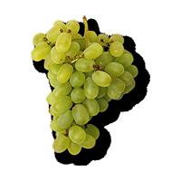 raisins-verts