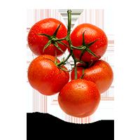 tomates-sur-vigne