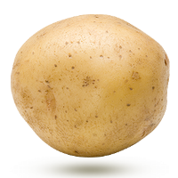 patate-jaune-yukon